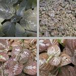 Chocolate Plants photographs
