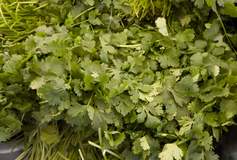 Cilantro for Sale at Haymarket Square