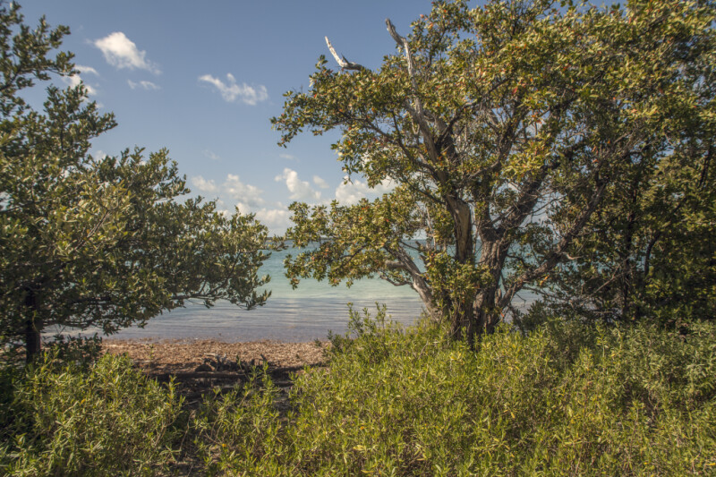 Clear Blue Water Seen Through Trees and Shrubs at Biscayne National Park