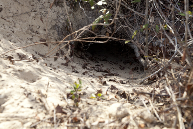 Close-Up of an Animal Burrow