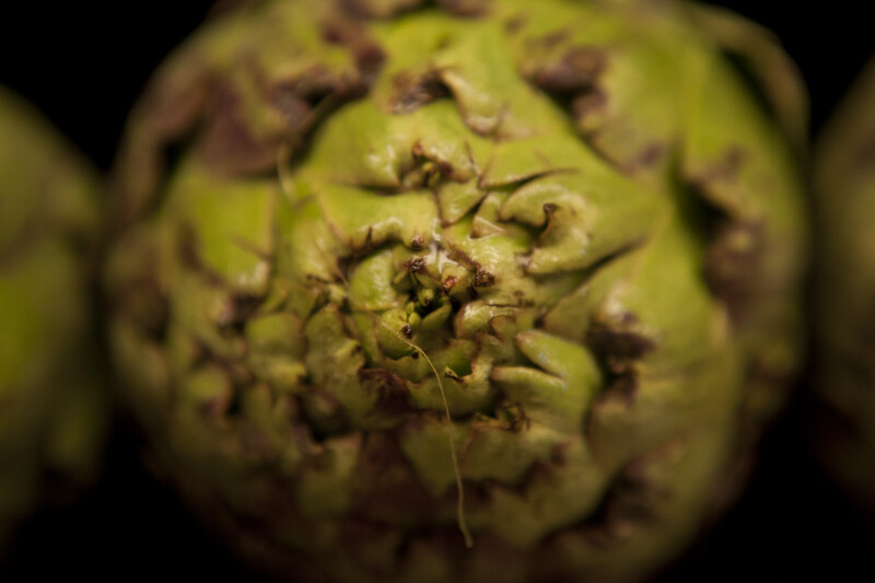 Close-up of Artichoke
