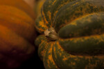 Close-up of Carnival Squash