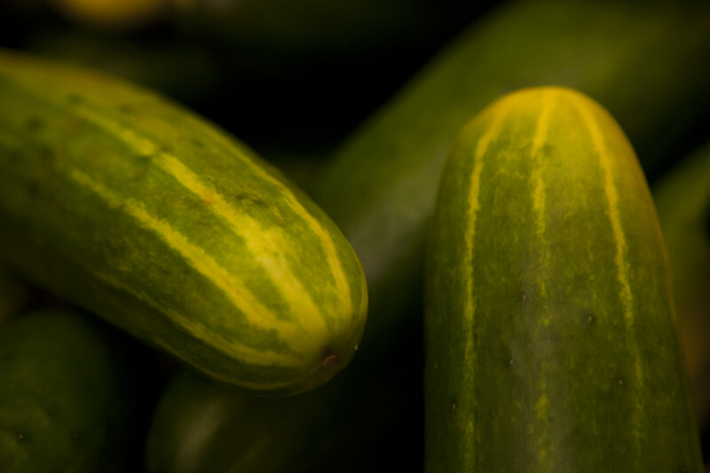 Close-up of Cucumbers
