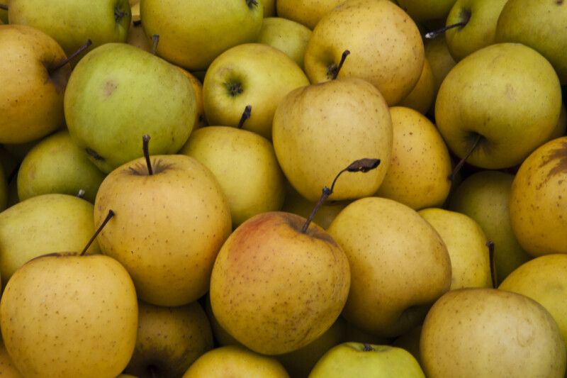 Close-Up of Golden Delicious Apples