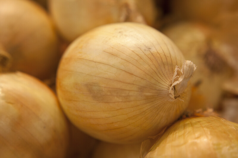 Close-up of Onion