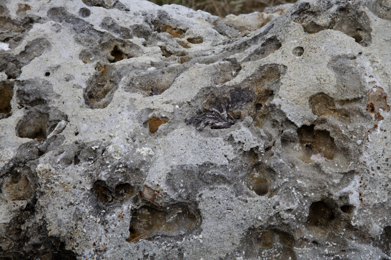 Close-Up of Porous Rock at Colt Creek State Park