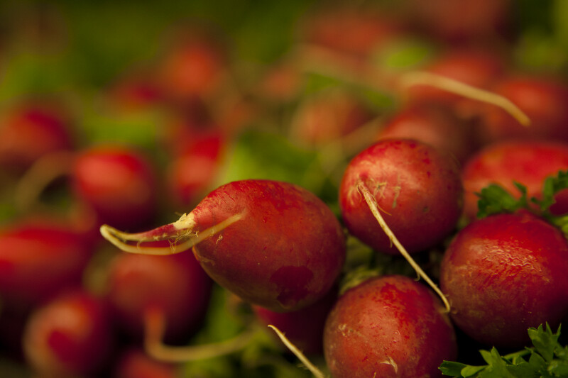 Close-up of Radish