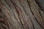 Close-Up of Redwood Bark