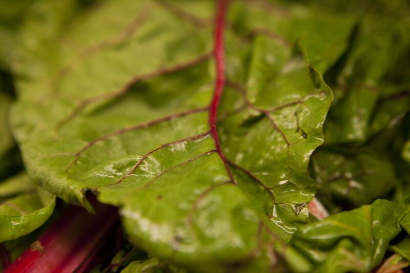 Close-up of Rhubarb Leaf