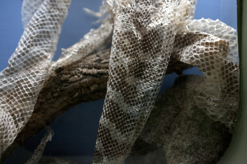 Close-Up of Snake Skin