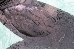 Close-Up Photo of the Back of a Northern Fur Seal