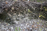 Close-Up View of a Shell Mound