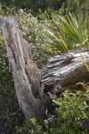 Close-Up View of Split Tree