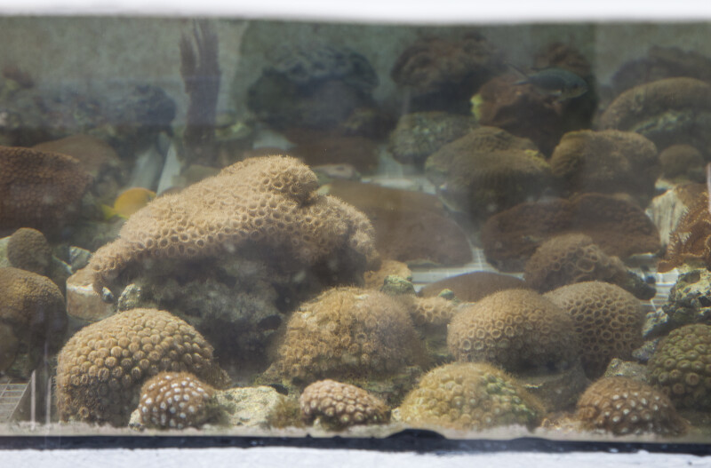 Cluster of Coral in Glass Tank