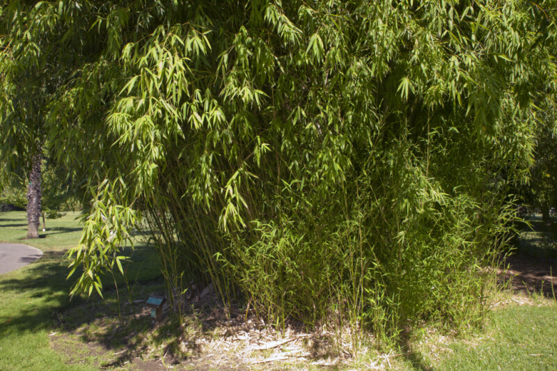 Clustered Timber Bamboo