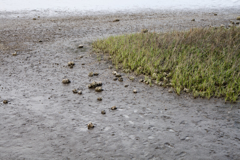 Clusters of Shells in Mud