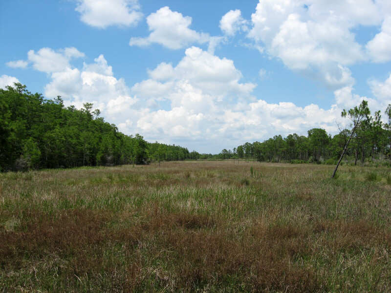 Coastal Prairie at Corkscrew