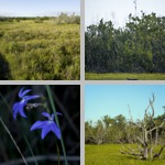 Coastal Prairies photographs