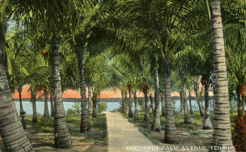 Cocoanut Palm Avenue