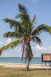 Coconut Palm Near a Sign