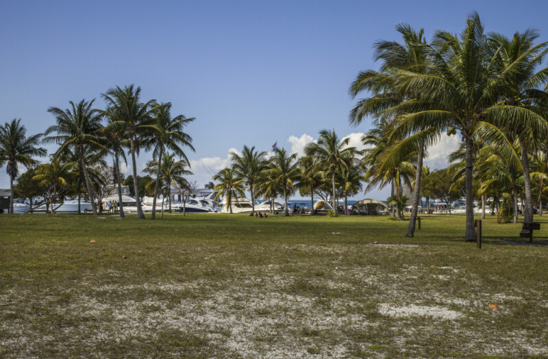 Coconut Palms Near the Marina at Biscayne National Park