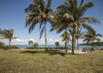 Coconut Trees at Biscayne National Park