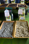 Coffee Beans, Roasted and Unroasted