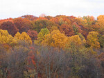 Colorful Autumn Treetops