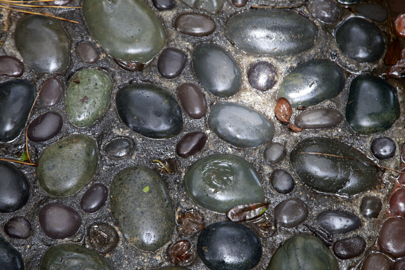 Colorful, Cemented Rocks at the Kanapaha Botanical Gardens
