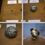 Comparative Anatomy photographs