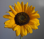 Composite Flower