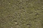 Concrete and Moss