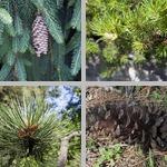 Cones photographs