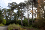 Coniferous Trees and Other Plants