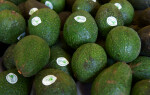 Conventionally Grown Hass Avocados