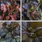 Copper Plants photographs