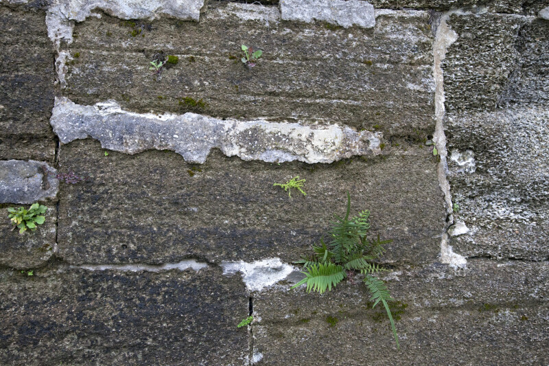 Coquina Ashlars Joined with Tabby Mortar