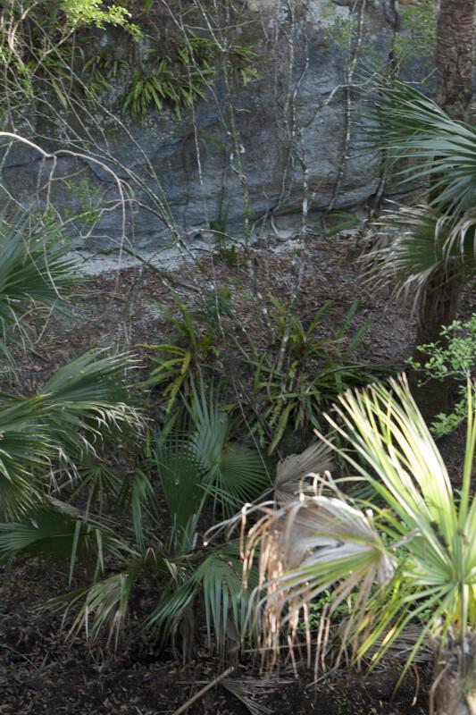 Coquina Rock Walls