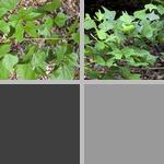 Coral Beans photographs