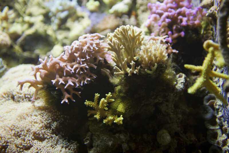 Coral Details
