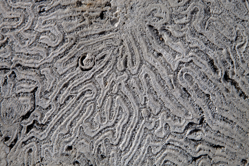 Coral Surface Close-Up