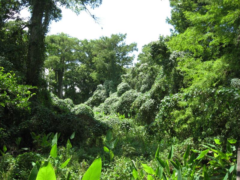 Corkscrew Forest