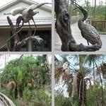 Corkscrew Swamp Sanctuary photographs