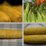 Corn photographs