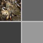 Crab photographs