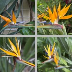 Crane Flowers photographs
