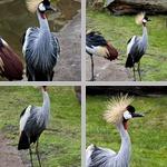 Cranes photographs