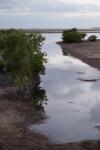Creek and Mangroves