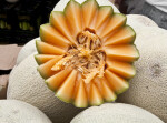 Cross-Section of a Cantaloupe