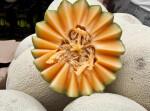 Cross-Section of a Cantaloupe